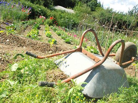 wheelbarrow in rogers field