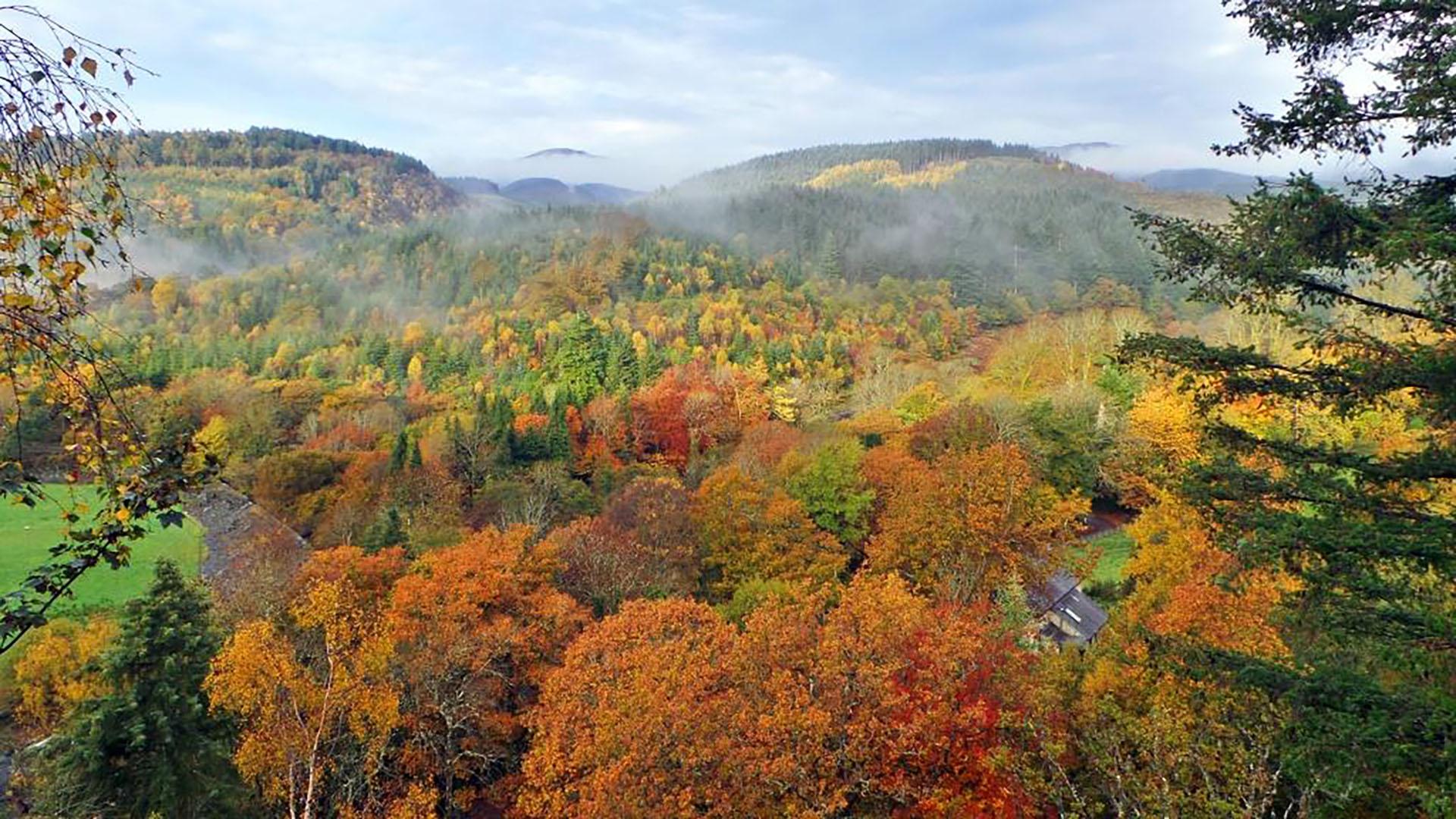 Woodlands of CAT in autumn