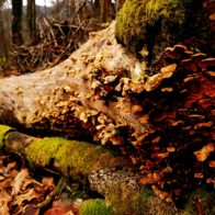 Picture of Sustainable Woodland Management