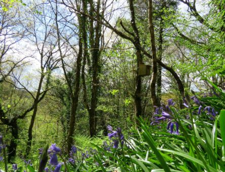 CAT woodland in spring