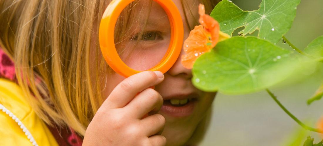 Child looking at a nasturtium leaf
