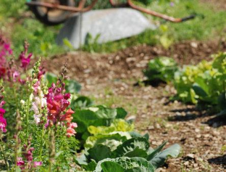 wheelbarrow in the CAT gardens