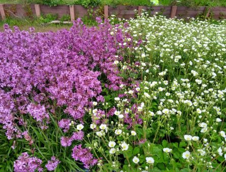 Plants for reintroduction - National Botanic Garden of Wales