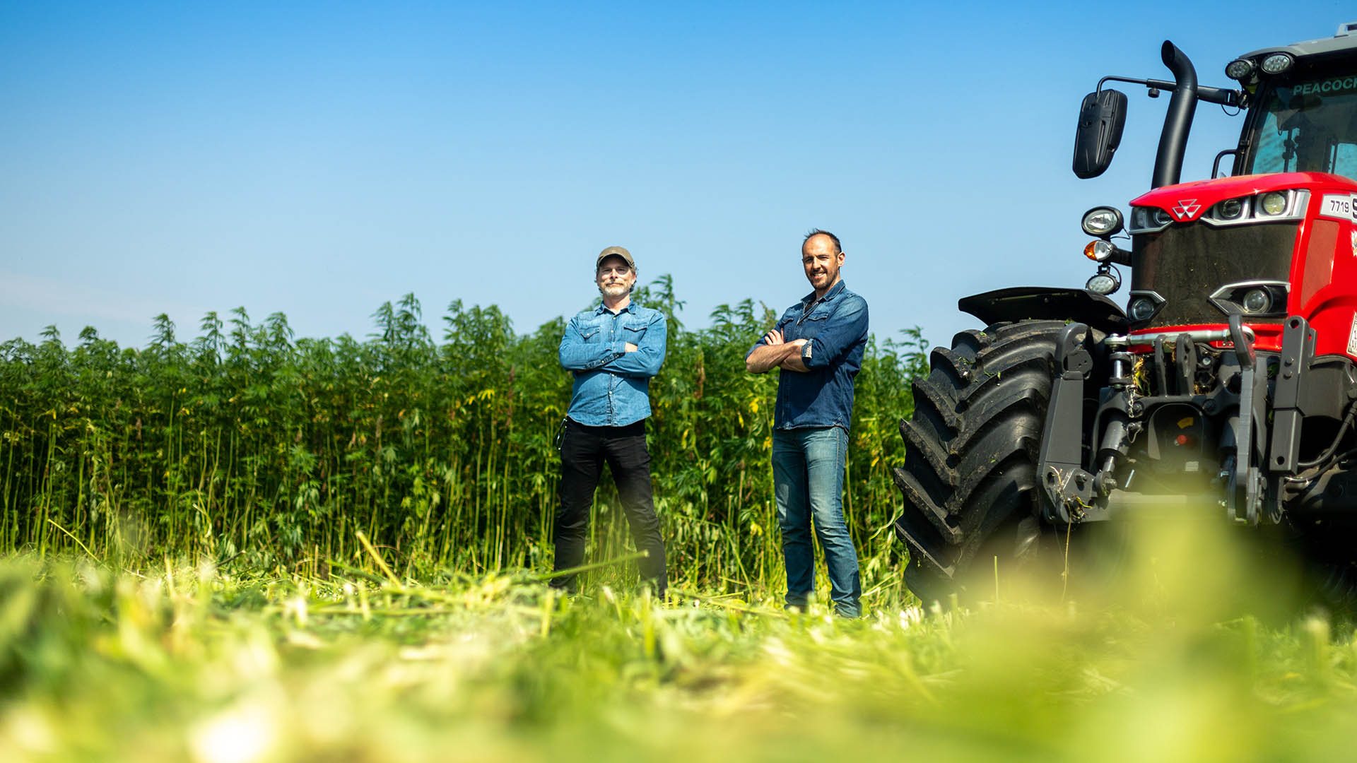 Scott Simpson and Sam Baumber stand next to a tractor in a partially harvested hemp field.